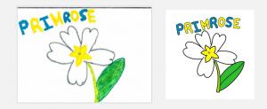 design0-primrose