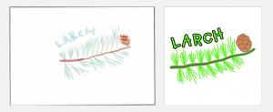 design2-larch