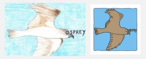 design6-osprey